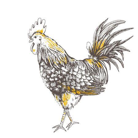 Vintage design handmade illustration with rooster. Hand drawn brown cock on beige background. Illustration of vector for your design.