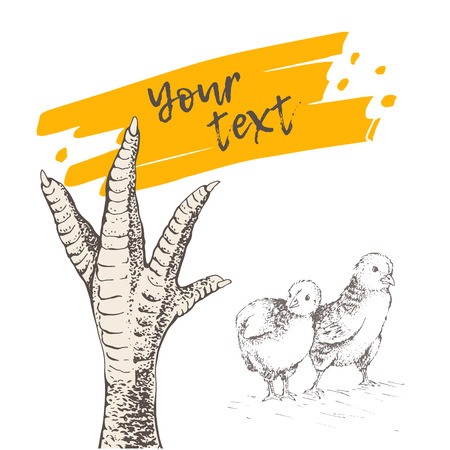 Huhn, Hahn oder Truthahn Fuß. Es gibt Platz für Ihren Text. In der Nähe von zwei Küken. Vintage Gravur Stil.