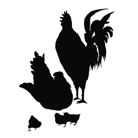 Illustration rooster, hen and chicken. Series of farm animals. Silhouette hand drawing birds family. Rooster fighter and a bully, ready to defend brood and chicken. Vintage engraving style. Illustration