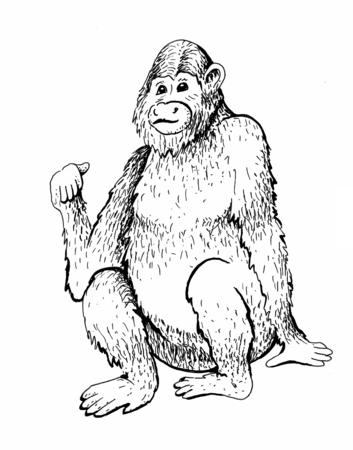 monkey sketch engraving