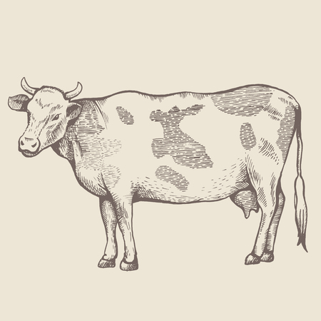 The spotted cow is standing. 向量圖像