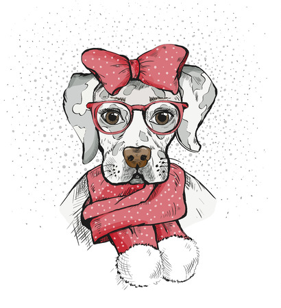 Cute Girl Dog in a winter scarf and red bow on its head. Pedigree dog. Labrador. 版權商用圖片