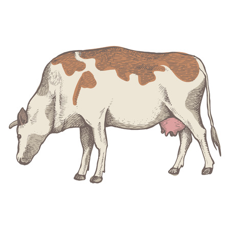The spotted cow is eating grass. View in profile. The drawing is drawn by hand with ink and a pen. Tracing.