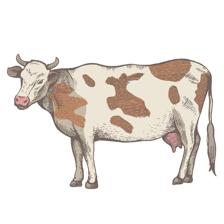 The spotted cow is standing. View in profile. The drawing is drawn by hand with ink and a pen. Tracing. Cut out 向量圖像