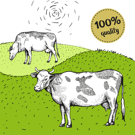 Two spotted cow is standing. View in profile. The drawing is drawn by hand with ink and a pen. Tracing. Bright sticker
