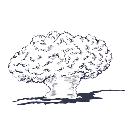 Mushroom cloud from the atomic bombing