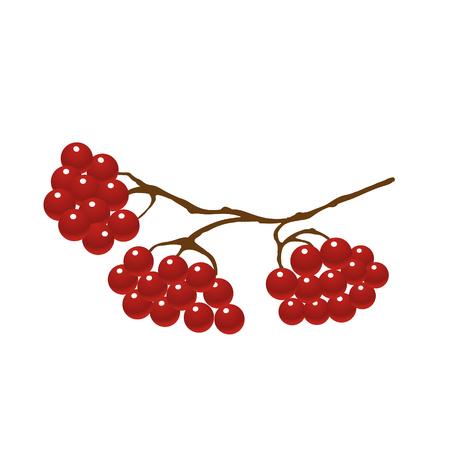 viburnum berries on tree branches