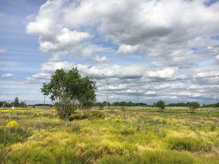 Nature. Cumulus clouds. Meadow 版權商用圖片