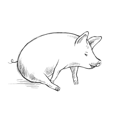 Contour Line Drawing. Funny pig. Hand-drawn. Cartoon. Coloring for kids. Ilustração