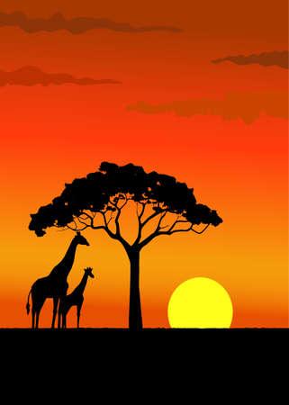 africa sunset: Africa tramonto