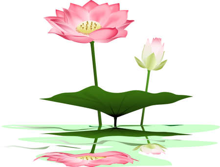 Lotus illustration Vector