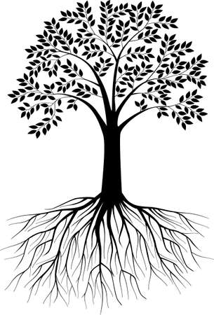 Tree illustration Illustration