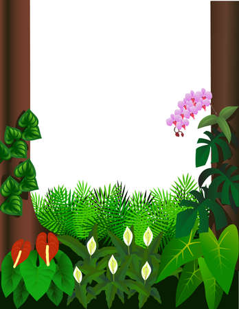 tree canopy: Forest illustration