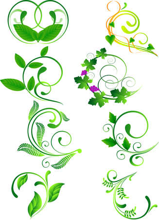 Collection of floral design Vector