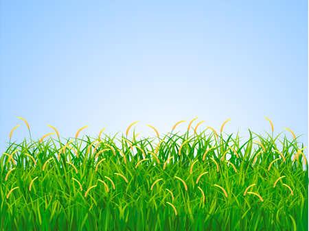 Green landscape Stock Vector - 5395368