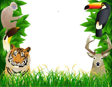 animal frame: Wild animal frame