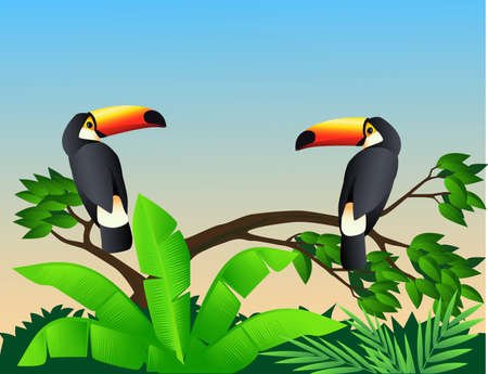 tucan: Toucan birds Illustration