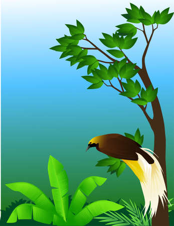 birds of paradise: Tropical bird Illustration