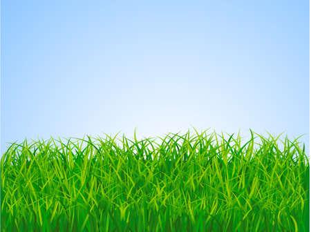 Grass landscape Stock Vector - 5568268