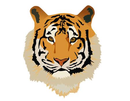Cabeza de tigre  Ilustración de vector
