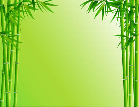 leaf close up: Bamboo forest