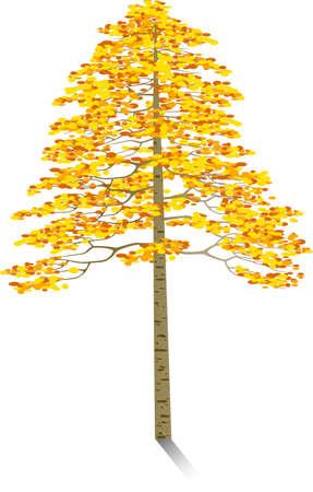 Autumn tree Stock Vector - 5599418