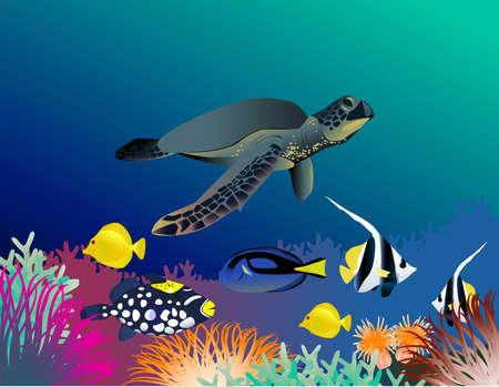 Sea Life Illustration Stock Vector - 5867693