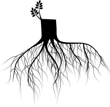 soils: Nuova filiale