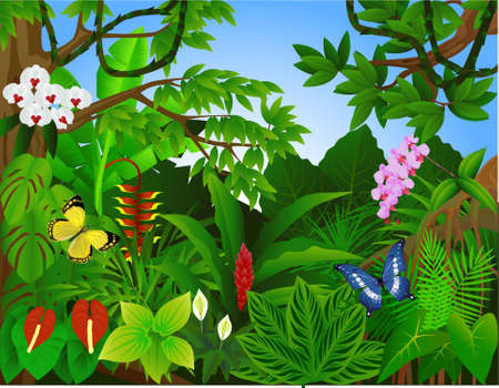 rain forest animal: Beautiful tropical forest  illustration Illustration