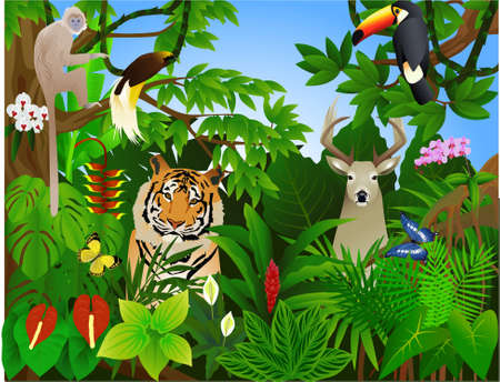 Wildlife animal in the tropical jungle