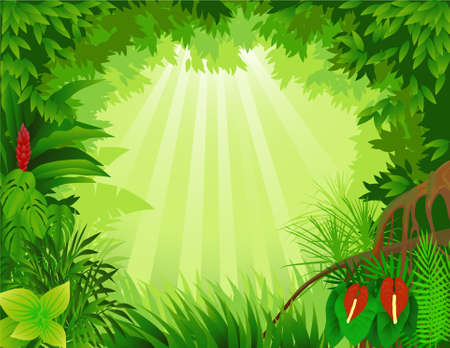 tree canopy: Tropical forest background Illustration