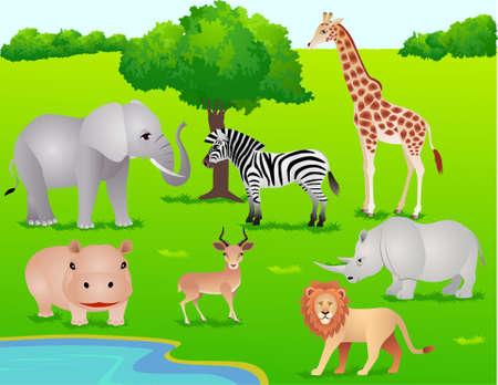 hippopotamus: Safari animal