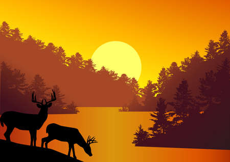 nature beauty: Deer silhouette in the nature Illustration