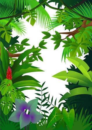 amazon forest: Forest ackground