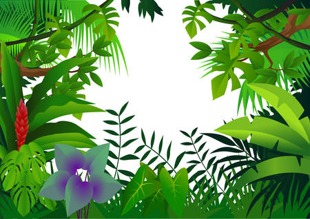 amazon forest: Forest background Illustration