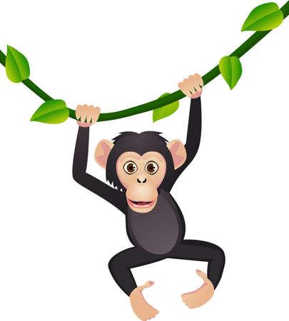 apes: Chimpanzee