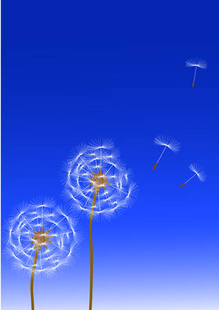 dandelion wind: Dandelion  Illustration