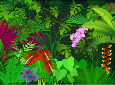 beautiful forest Stock Vector - 8040454