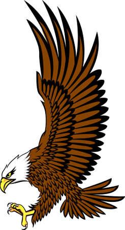 aguila americana: águila calva