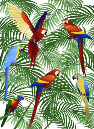 beaks: Illustrazione del pappagallo Vettoriali
