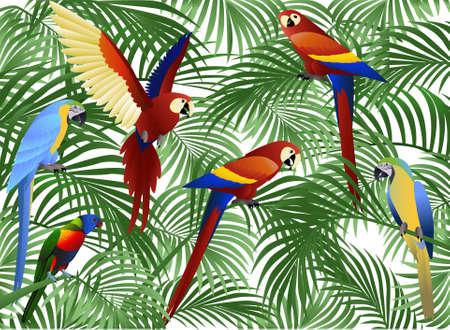 Parrot illustration Stock Vector - 8455231