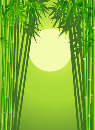 tall grass: Bambo forest background Illustration