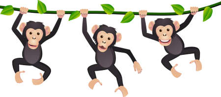 cute cartoon monkey: Three chimpanzee Illustration