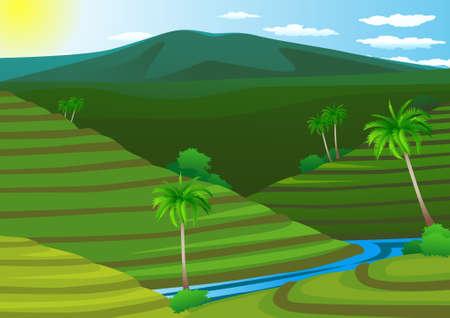 indonesien: Reis Feld Terrasse