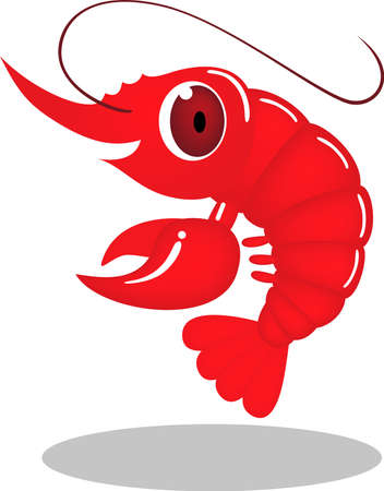 crustacean: Prawn illustration