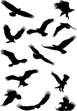 silueta aves: Silueta de �guila