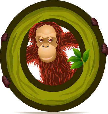 alphabet O with Orangutan cartoon Vector