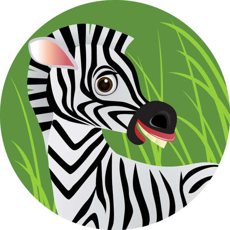 safari animal: Zebra cartoon