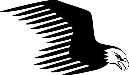 eye shadow: Eagle