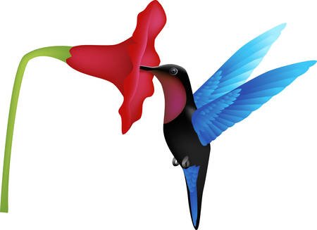 flocks: hummingbird vector Illustration